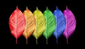 Färger av regnbågen Modell av mångfärgad sidatexturbakgrund Ljusa färgrika körsbärsröda sidor som isoleras på svart Färgconce arkivfoton