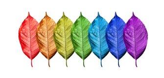 Färger av regnbågen Sju färger av regnbågen Modell av mångfärgad sidatexturbakgrund Den ljusa färgrika körsbäret lämnar mig royaltyfri bild
