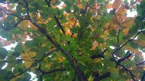 Färger av sidor Royaltyfri Fotografi