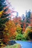 Färger av vägen i höst Arkivbild