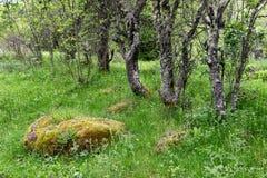 Färger av våren i natur parkerar det gamla berget arkivfoto