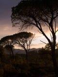 Färger för höstsolnedgånghimmel på skog Arkivbild