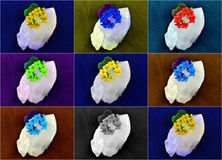 Färger för intryckkvartsblomma Fotografering för Bildbyråer