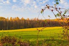 Färger för nedgång för trän för fält för höstlandskapsikt Royaltyfri Fotografi