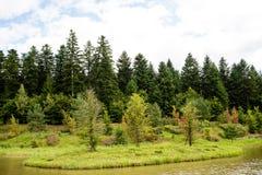 Färger för nedgång` s i skogen Royaltyfria Bilder