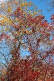 Färger för nedgånglövverk fotografering för bildbyråer