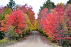 Färger för nedgånglövverk gränsar en grusväg i adirondacksen Arkivfoton