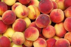 Färger i fruktfikonträd Royaltyfri Foto