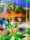 Färger i trädgård Arkivfoto