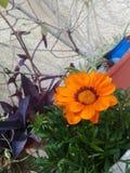 Färger och blommor i trädgården Royaltyfri Bild