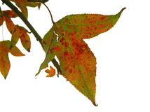 färger torkar leaves Royaltyfri Foto