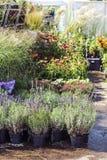 Färger, växter och lösa örter med prislappar i det växt- lagret royaltyfri bild