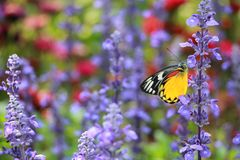 Färgerna av blommor och butterflie Arkivfoto