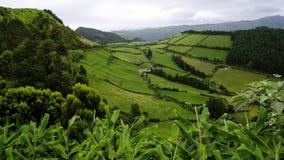 Färgerna av den SaoMiguel ön. Azores Arkivbild