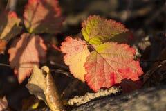 Färgerna av hösten arkivfoto
