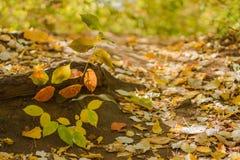 Färgerna av hösten Fotografering för Bildbyråer