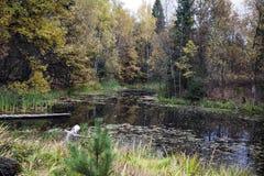 Färgerna av hösten i Ryssland royaltyfri fotografi