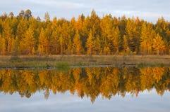 Färgerna av hösten i skogarna av Finland Arkivfoton