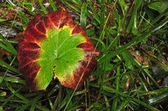Färgerna av naturen Royaltyfria Bilder