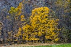 Färgerna av nedgången i Midwesten royaltyfri fotografi