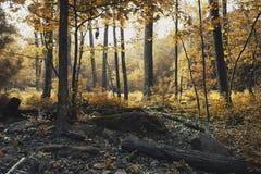 färgfält Arkivfoto