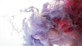 Färgfärgpulverdroppe Långsam falll Violett ljus -, rött, magentafärgat stock video