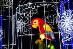 Färgfågel i kines för show för burljusneon arkivfoton