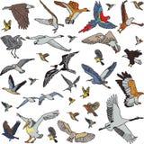 Färgfåglar ställde in den sömlösa modellen Arkivbilder