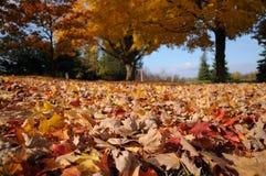 färgfall Royaltyfri Fotografi