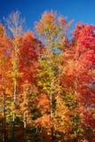 färgfall Arkivbild