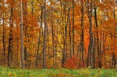 färgfall Arkivfoton