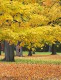 färgfall Arkivfoto