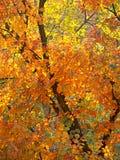 färgfalllövverk royaltyfri fotografi