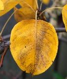 färgfallleaves Royaltyfria Bilder
