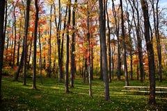 färgfallpennsylvania skogsmarker Royaltyfri Fotografi