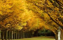 färgfalltree Arkivfoton