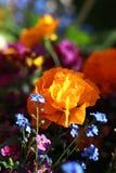 färgfjäder Royaltyfri Bild