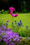 färgfjäder Royaltyfri Foto