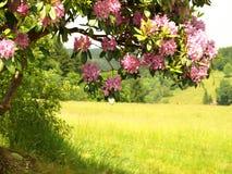 färgfjäder Royaltyfria Bilder