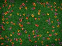 färgfjäder Arkivfoton