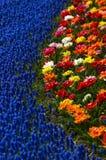 färgfjäder royaltyfria foton