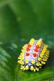 Färgfjärilen avmaskar arkivfoto