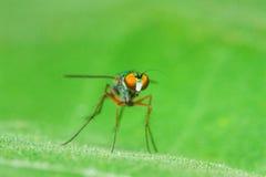 Färgfluga på det gröna bladet fotografering för bildbyråer