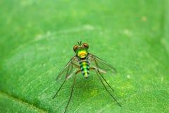 Färgfluga på grön bladframdel royaltyfria bilder
