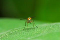 Färgfluga på grön bladframsida royaltyfri foto
