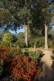 Färgglad blomma i trädgård arkivbild