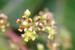 färgglad blommamango Arkivfoton
