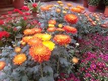 Färgglad blommaträdgård Fotografering för Bildbyråer