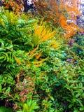 Färgglad buske Arkivfoto