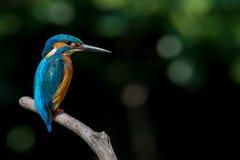 Färgglad fågel som sätta sig på filial Royaltyfri Fotografi